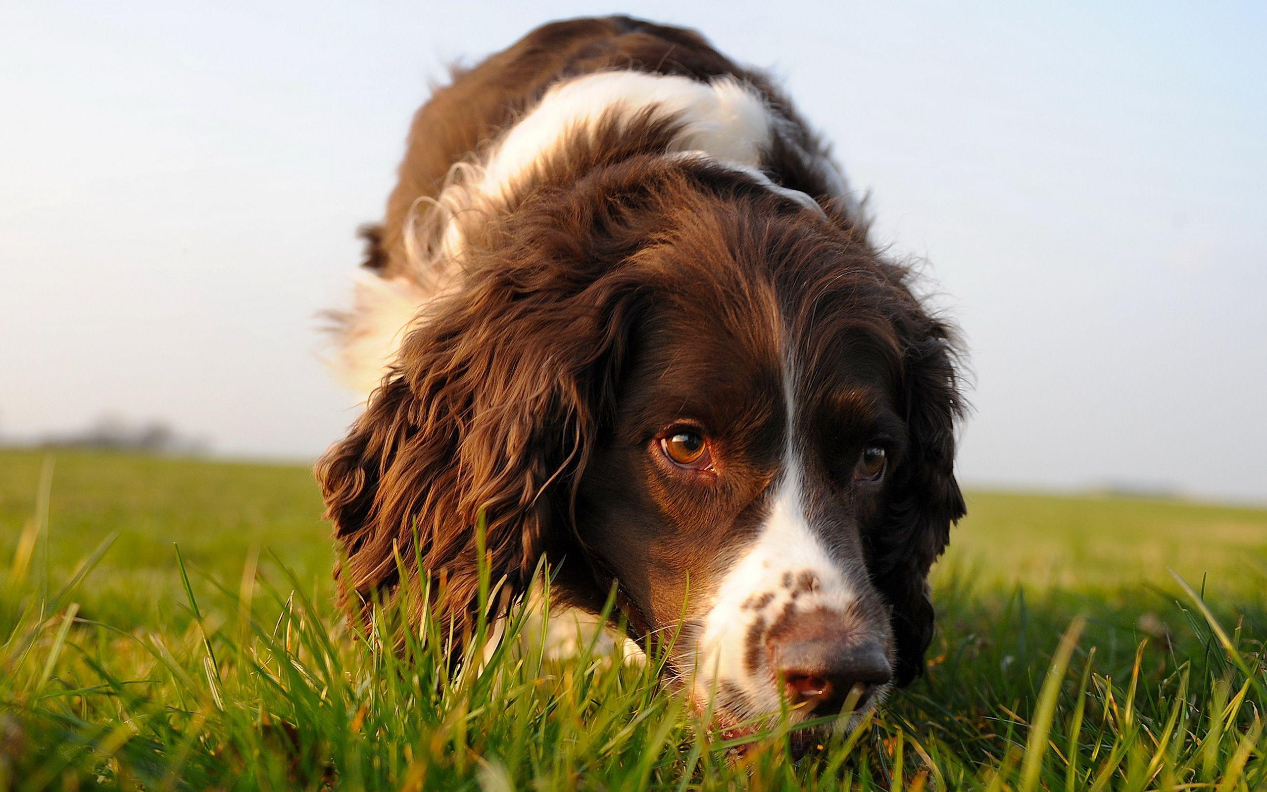 o cão e o cheiro