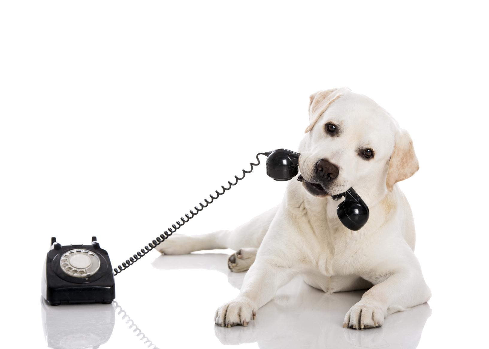 Cães e a voz