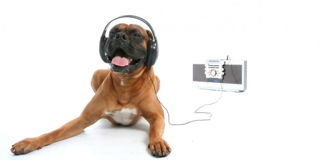 Cachorro e musica