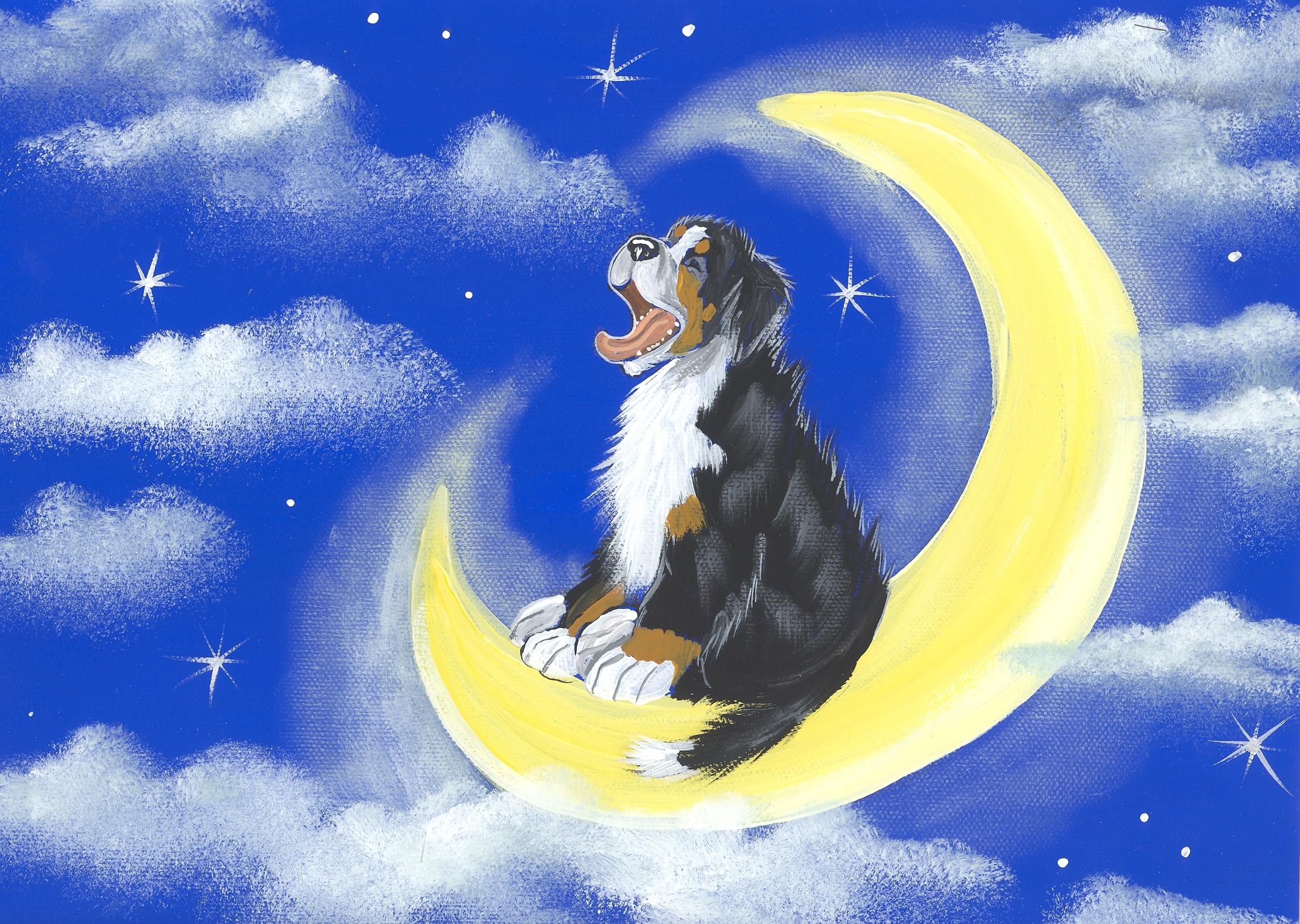 cães sonham